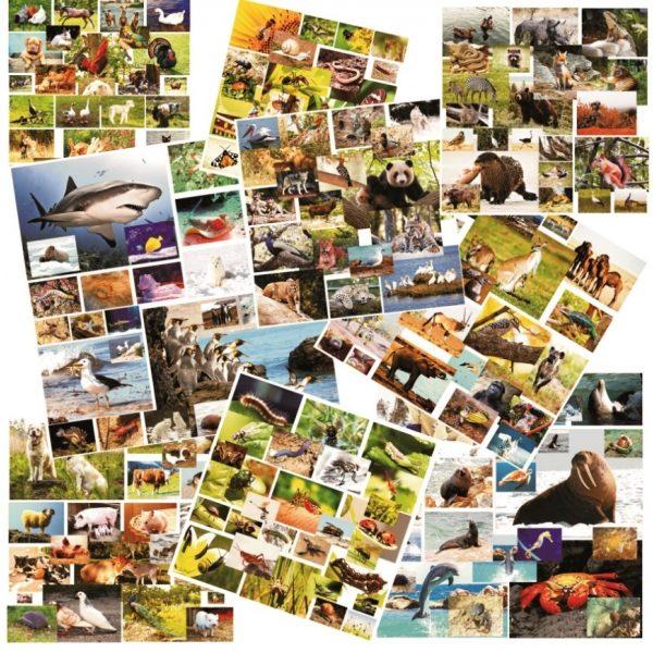 imagini cu animale si pasari