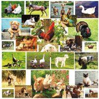 Jetoane cu animale si pasari domestice