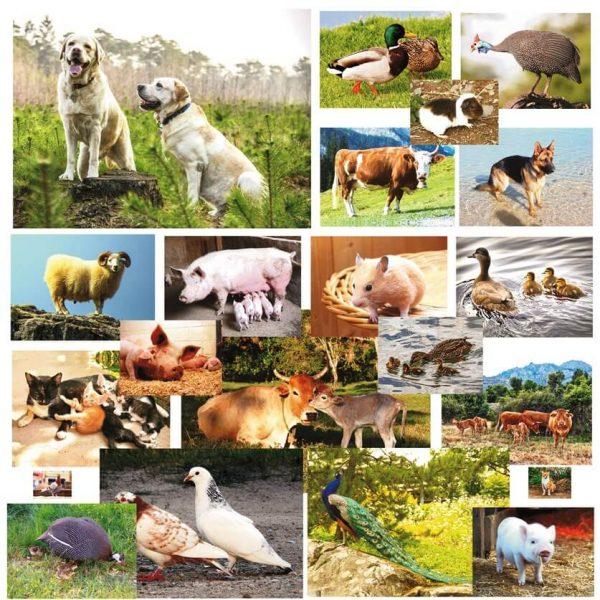 Animale si Pasari Domestice din Romania