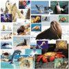 imagini cu animale marine si polare