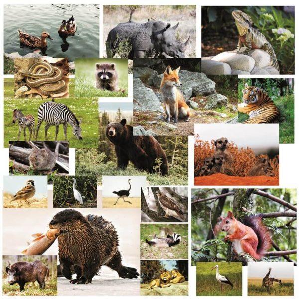 Imagini cu animale si pasari salbatice