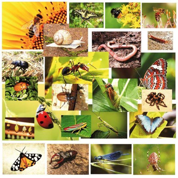 imagini cu insecte
