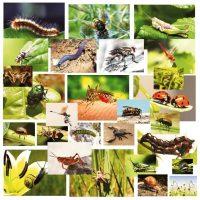 imagini cu micile vietuitoare - insectele